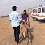 Rescuing injured donkey in Winger