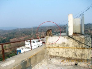 Monkey on building roof792594
